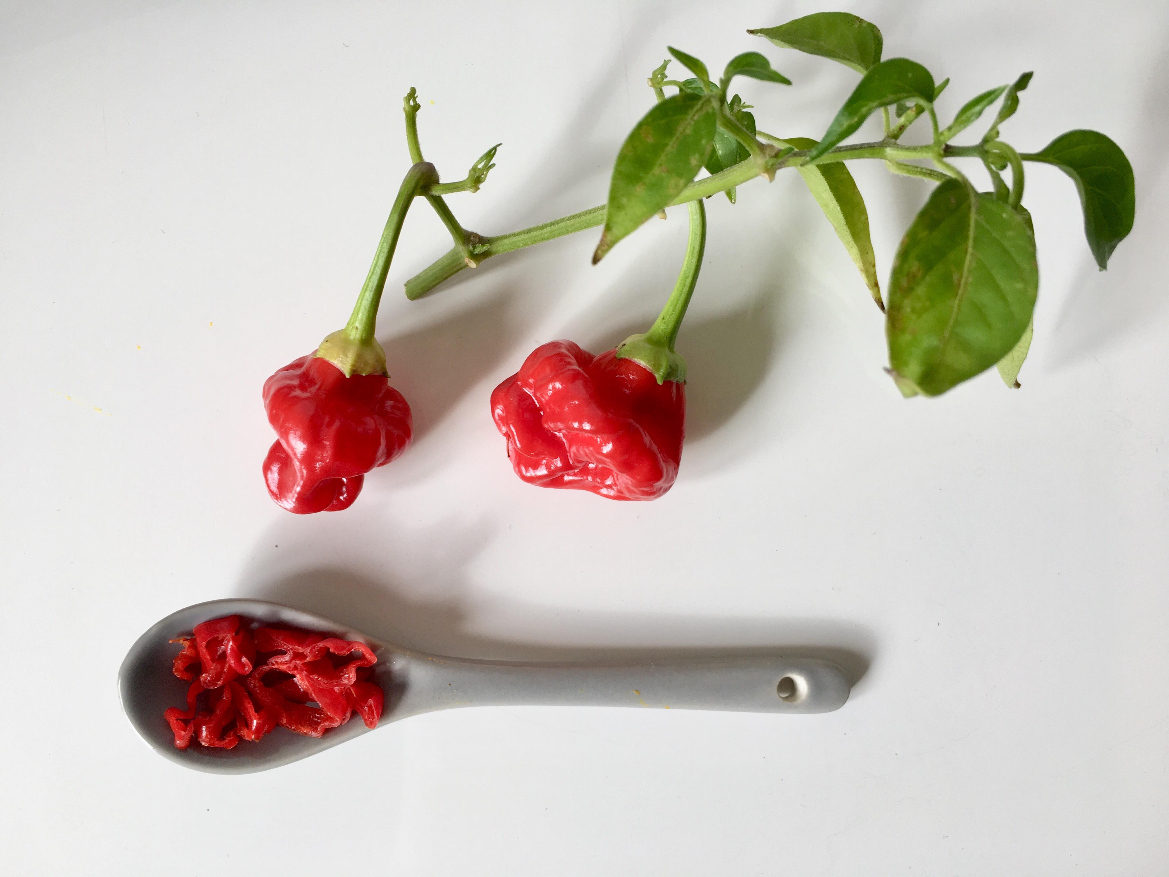Herbstliche Kürbissuppe mit Chili: Chili Habanero